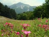 秩父市羊山公園b2012.05.21