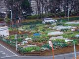 区民農園09.12.28.jpg