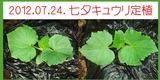 2012.07.24.七夕キュウリ区民農園