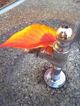 水道と紅葉