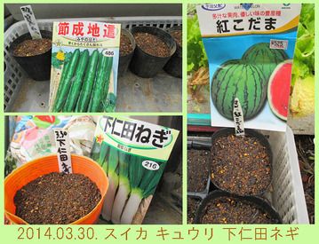 種蒔き2014.03.30.jpg