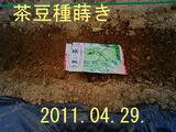 茶豆種蒔き2011.04.29
