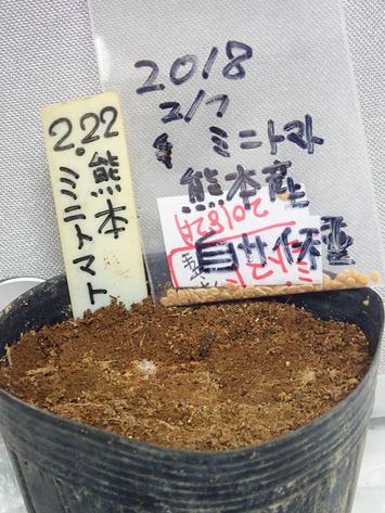 熊本産ミニトマト2019.02.22