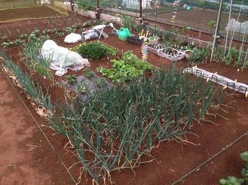 区民農園-1