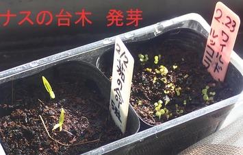 ナス台木2020.02.29