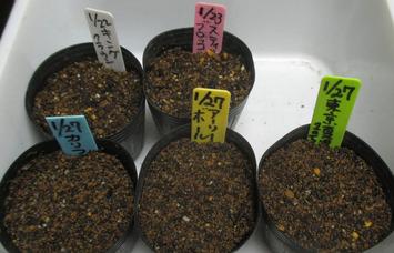 種蒔き2016.01.27