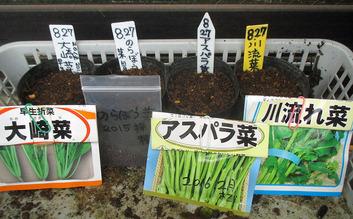 折り菜類種蒔き2016.08.27
