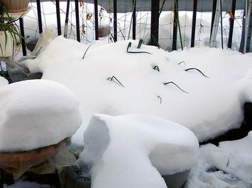 バルコニー菜園の雪2018.0125