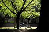 三つの自転車