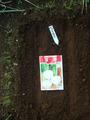 中カブ玉波201210.21.種蒔き