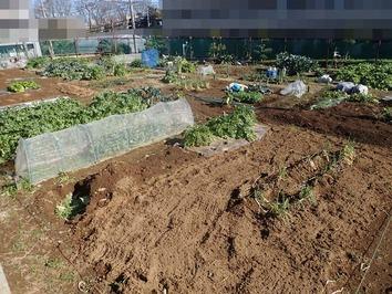 区民農園 2020.10.10
