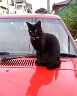 黒猫06.10.14.