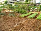 区民農園09.08.23.jpg