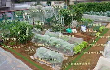 区民農園2019.09.22-2