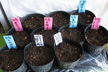 種蒔き2015.02.04