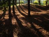 秋の光2010.11.06