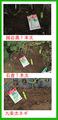 ネギ種蒔き2013.09.26
