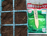 キャベツ種まき2010.07.29.jpg