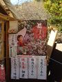 梅まつり2011.01.31