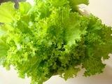 山東菜収穫2010.03.16.jpg
