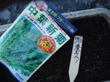 春菊2010.10.10.