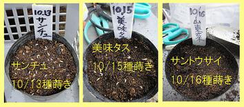 種蒔き中毒2017.10.17