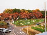 区民農園2010.11.26