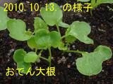おでんダイコン2010.10.13
