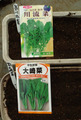 折り菜種蒔き2012.09.29