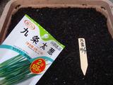 九条太ネギ種蒔き2010.10.07