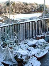 雪2010.02.02.jpg