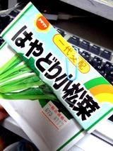 はやどり小松菜種蒔11.05