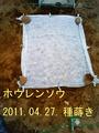 ホウレンソウ種蒔き2011.04.27