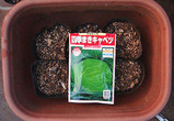 四季蒔きキャベツ種まき07.30.jpg