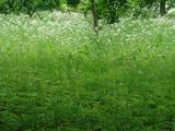 秩父市羊山公園a2012.05.21