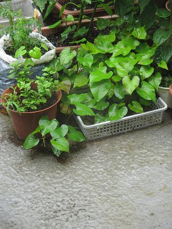 ゲリラ豪雨2016.08.27