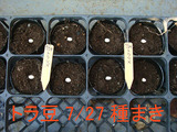 トラ豆種まき2010.07.27.jpg