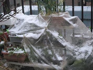 降雪2016.02.25