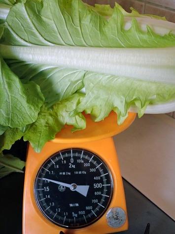 花芯白菜1.6kg2018.12.17