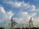 秋2010.08.29.jpg