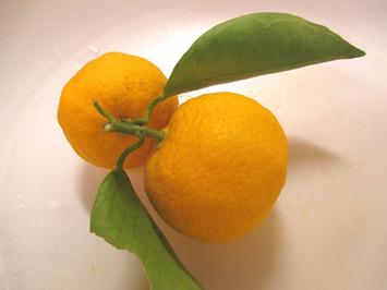 自家製柚子2015.02.04