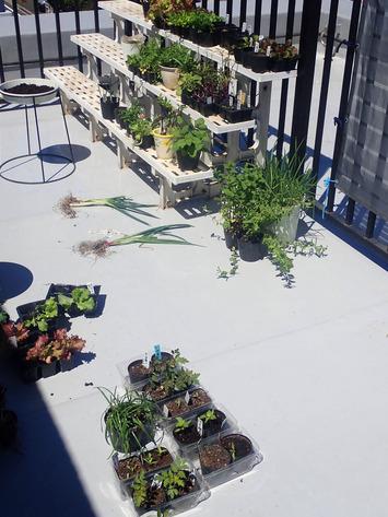 バルコニー菜園再設定2020.04.19