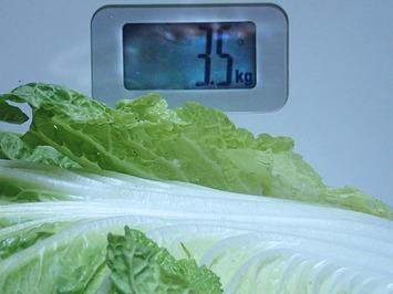 3.5kg白菜2018.1128