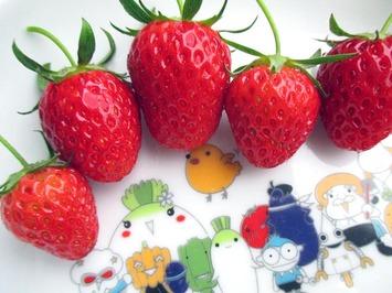 イチゴ初収穫2014.05.13.jpg
