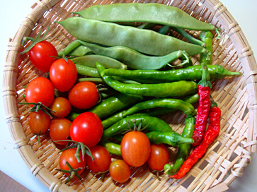 インゲン収穫09.11.21.jpg