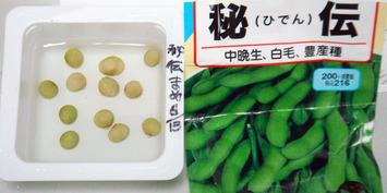 秘伝豆2020.06.13