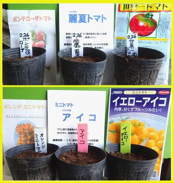 トマトの種蒔き2018.02.26