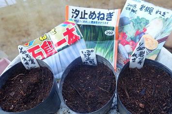 ネギ種蒔き2020.01.20