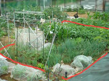 区民農園2020.05.31.