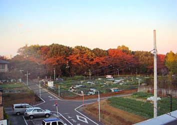 2008.1121.4.30晩秋の区民農園.jpg